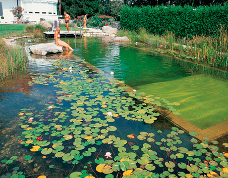 The natural swimming pool elpasonovicegardener - Natural swimming pool design ...